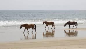 horses-on-the-beach
