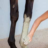 mud-leg